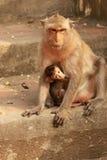 Affe-Baby mit Mutter Stockfoto