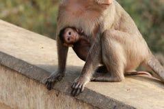 Affe-Baby umarmt Affe-Familie Lizenzfreies Stockfoto