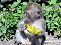 Affe, Banane Lizenzfreie Stockfotos