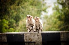 Affe bei Idukki Lizenzfreie Stockfotografie