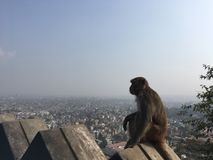 Affe bei Swayambhunath Stupa in Kathmandu-Stadt im Kathmandutal, Nepal Stockfotos