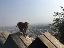 Affe bei Swayambhunath Stupa in Kathmandu-Stadt im Kathmandutal, Nepal Lizenzfreies Stockbild