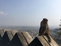 Affe bei Swayambhunath Stupa in Kathmandu-Stadt im Kathmandutal, Nepal Stockfotografie