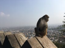 Affe bei Swayambhunath Stupa in Kathmandu-Stadt im Kathmandutal, Nepal Lizenzfreie Stockfotografie