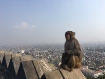 Affe bei Swayambhunath Stupa in Kathmandu-Stadt im Kathmandutal, Nepal Lizenzfreies Stockfoto