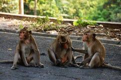 Affe bei Thailand Lizenzfreies Stockbild