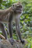Affe bei Tiger Cave Temple, Thailand Stockbilder