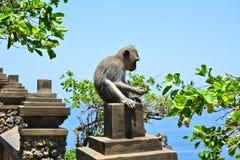 Affe bei Uluwatu Stockfotografie