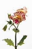 Affe-Blumen Stockfotos