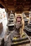 Affe, Buddanath-stupa, Nepal Lizenzfreies Stockbild