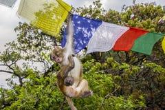 Affe in den Gebetsflaggen Lizenzfreie Stockfotos