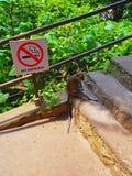 Affe an den malaysischen Batu-Höhlen Lizenzfreie Stockfotos