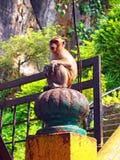 Affe an den malaysischen Batu-Höhlen Stockfotos