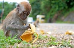 Affe an den Seitenweisen Lizenzfreie Stockfotografie