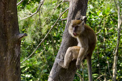 Affe in den wild lebenden Tieren Stockfotografie