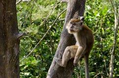 Affe in den wild lebenden Tieren Lizenzfreie Stockfotos