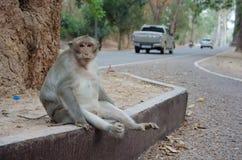 Affe, der allein auf der Seite der Straße sitzt Lizenzfreie Stockbilder