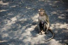 Affe, der allein auf Straßen-Seite sitzt Lizenzfreie Stockfotografie