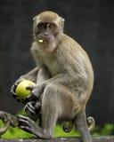 Affe, der Apple isst Lizenzfreie Stockbilder