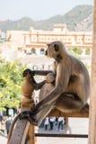 Affe, der auf Balkon stillsteht Stockfotos