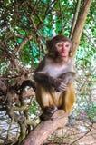 Affe, der auf Baum sitzt Lizenzfreie Stockfotos