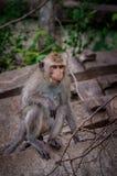 Affe, der auf Beton klettert Stockfotos