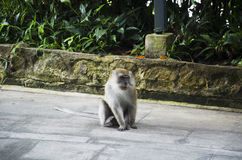 Affe, der auf Boden sitzt Lizenzfreies Stockfoto