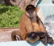 Affe, der auf Boot sitzt Lizenzfreies Stockfoto