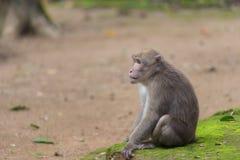 Affe, der auf dem Boden sitzt Stockfotografie