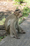 Affe, der auf dem Boden sitzt Stockbilder