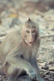 Affe, der auf dem Boden sitzt Lizenzfreie Stockbilder