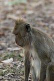 Affe, der auf dem Boden sitzt Lizenzfreie Stockfotos