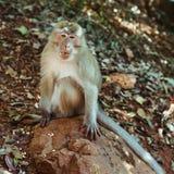 Affe, der auf dem Felsen sitzt Lizenzfreies Stockfoto
