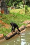 Affe, der auf dem Fluss sitzt Lizenzfreie Stockfotos