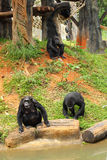 Affe, der auf dem Fluss sitzt Lizenzfreie Stockbilder