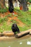 Affe, der auf dem Fluss sitzt Lizenzfreies Stockbild