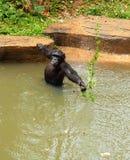 Affe, der auf dem Fluss sitzt Lizenzfreie Stockfotografie