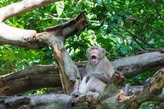 Affe, der auf dem Klotz sitzt Stockbilder