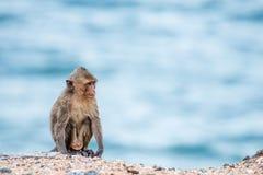 Affe, der auf dem Sand sitzt Stockbild