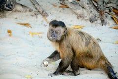 Affe, der auf dem Sand spielt Lizenzfreie Stockfotos