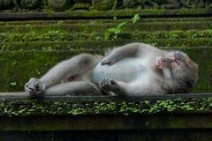 Affe, der auf dem Stein liegt Lizenzfreie Stockbilder