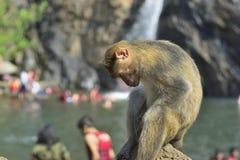 Affe, der auf dem Stein sitzt Lizenzfreies Stockfoto