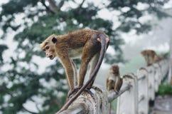 Affe, der auf dem Stein sitzt und stillsteht Stockbilder