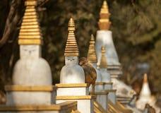 Affe, der auf dem stupa sitzt Lizenzfreie Stockbilder