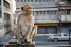 Affe, der auf dem Zaun sitzt Stockfotografie