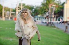 Affe, der auf dem Zaun sitzt Stockfotos