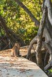 Affe, der auf der Bahn sitzt Selektiver Fokus Stockbilder