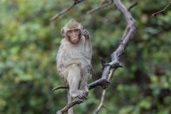 Affe, der auf der Niederlassung, Khao noch in Nakhon- Sawanprovinz sitzt Lizenzfreie Stockfotos
