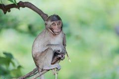 Affe, der auf der Niederlassung, Khao noch in Nakhon- Sawanprovinz sitzt Lizenzfreie Stockfotografie