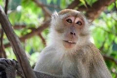 Affe, der auf einem Baum sitzt Stockbilder
